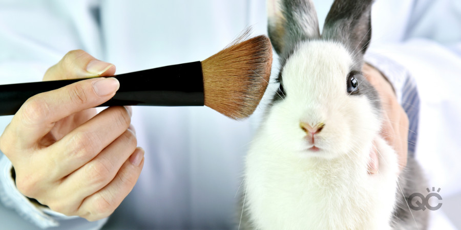 bunny rabbit being tested on by makeup cosmetic companies is not cruelty free
