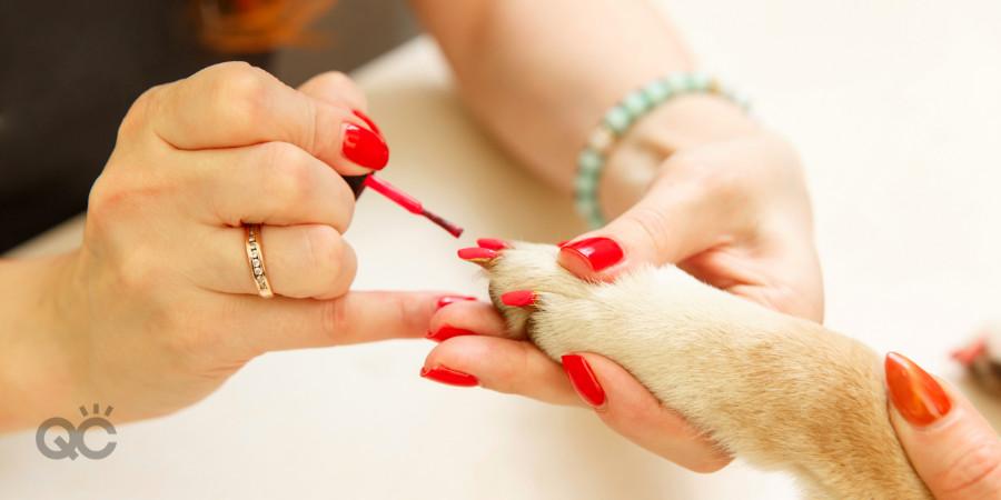 dog manicurist makeup artist jobs