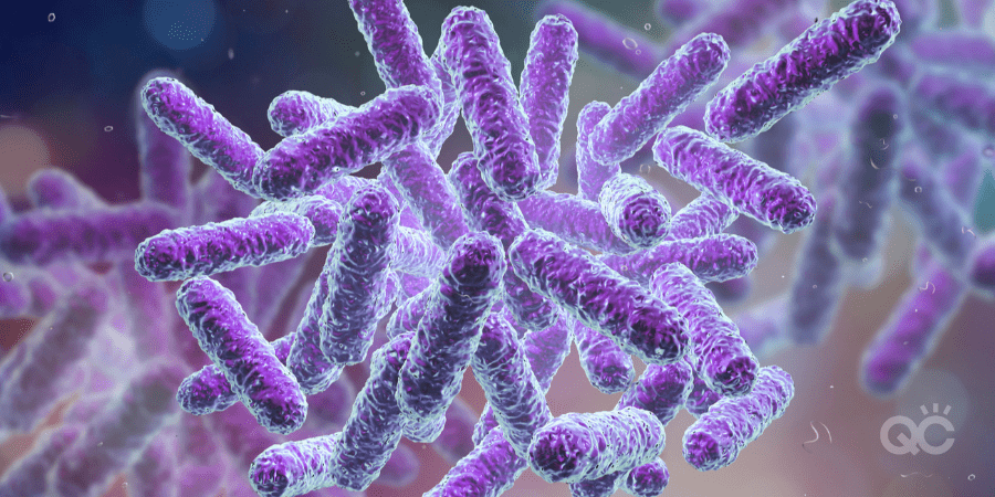purple-colored bacteria under miscroscope